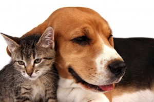 dog-and-cat-300x200